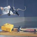 мышь в м